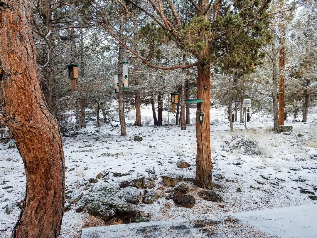 Winter_20181201-095027.jpg